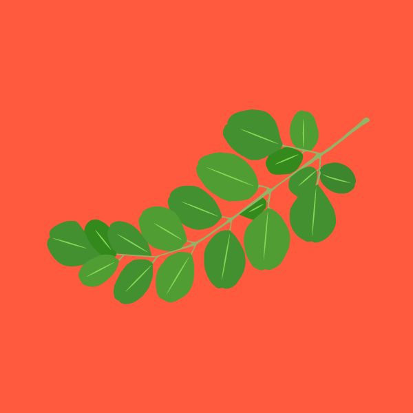 Frankincense image