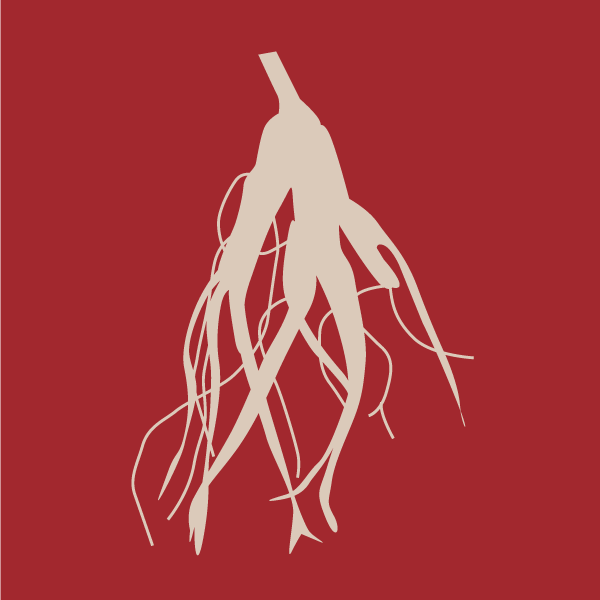 Red Root Ginseng