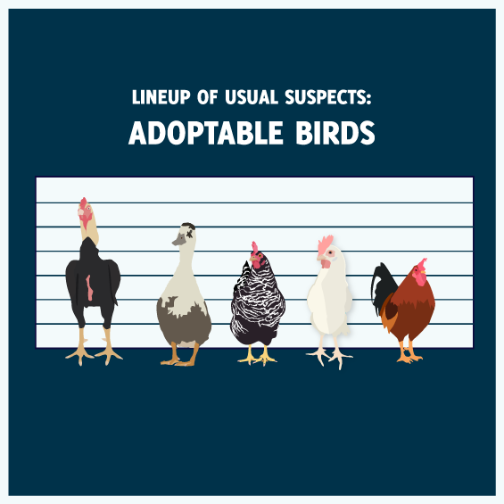Lineup of Usual Suspects: Adoptable Birds