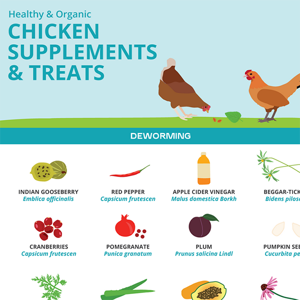 Healthy Chicken Supplements and Treats Guide Infographic
