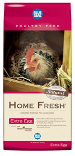 BlueSeal Home Fresh Extra Egg image